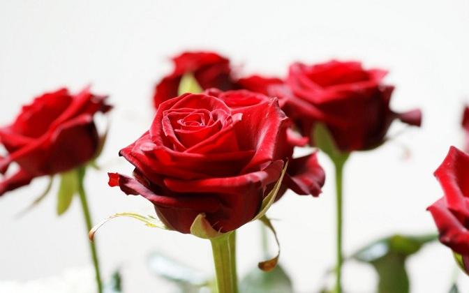 ceremonia civil, ceremonia de la rosa, pareja, ceremonia alternativa, rosas, rosa roja, pareja, novios, boda, invitados, novia, novio, votos matrimoniales, felicidad, madre, familias